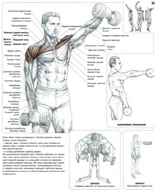 P Упражнения для мышц плеч (картинки 1 и 2 - это одно и тоже упражнение)./p