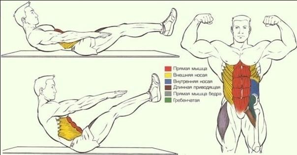 Как накачать мышцы в домашних условиях живота